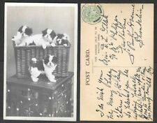 1907 Dog Real Photo Postcard - Basket of Puppies
