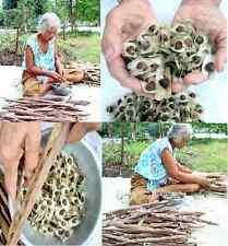 4,000 MORINGA OLEIFERA Seeds Pure Natural Herb Organic PHYTOSANITARY CERTIFICATE