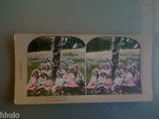 STC348 Fillette fleurs marguerites couleurs STEREO Photography Stereoview