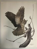 """GUY COHELEACH GREAT HORNED OWL ARTIST SIGNED PLATE XVI 31 X 24"""" 1970"""