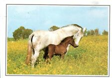 Pferdepostkarte Pferd Polen Kopf Schimmel horse postcard cheval carte postale