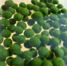 25 x Marimo Moss Balls (5-7 mm) Live Cladophora Aquarium Plant Fish tank