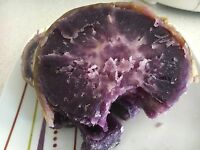 Hawaiian Purple Sweet Potato x4 Unrooted Plants/ Stem Cutting