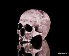 Human female skull replica - REAL SIZE, BRAND NEW (No.1)