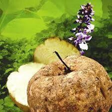 250 g  Pure Pueraria Mirifica Herb Powder (premium grade)  with Tracking