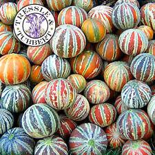 Kajari Melon fruit  Rare 15 seeds UK SELLER