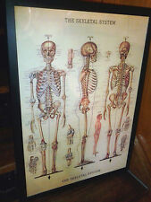 Fantastic Human Skeletal System Biology Retro Print in Black 74 x 54cm Frame New