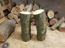 Partially Seasoned  English Elm logs handpicked by a pro woodturner