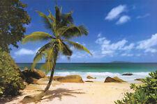 Palm Beach (Tropical Landscape Photo) Art Poster Print Poster Print, 36x24