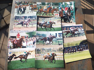 11 Photos Champion Thoroughbred Race Horses - Strike The Gold, Go And Go, MORE!