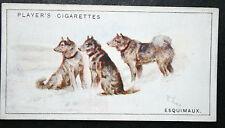 Canadian Eskimo Dog Esquimaux Husky Vintage Colour Card # Vgc