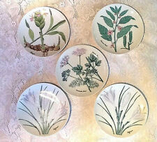 """VINTAGE HORCHOW  COLLECTION SET OF 5  HERB SALAD PLATES 7 5/8"""" - VERY GOOD COND."""
