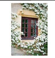 50  seeds Bag Rare Climbing Jasmine Flower Seeds White Jasmine  Fragrant Plant