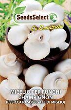 1 Conf. da 25 grammi con istruzioni - MICELIO SECCO DI FUNGHI - Champignon