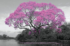 PINK BLOSSOM TREE - POSTER 24x36 - BEAUTY NATURE 33898