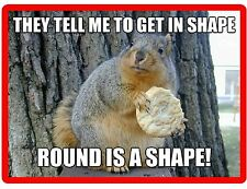 Funny Squirrel In Shape Refrigerator / Tool Box Magnet Gift Card Insert