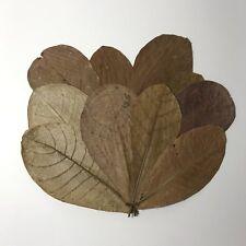 USA 10pc Catappa Indian Almond Leaf Leaves betta, shrimp, discus, pleco, fish