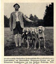 Georg Stühlinger Zuchtbuchführer des Weimaraner- Vereins Österreich