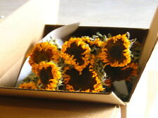 Beautiful Sunshine Dried Natural Sunflower Bundle Great Mother's Day Gift!