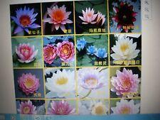 Mini bonsai Lotus water lily 20 x mixed colour seed pond aquarium plant seeds