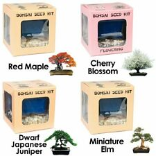Special Price 3-for-4 Bundle Eve's Bonsai Seed Kit to Grow Bonsai Tree from Seed