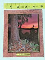 Vtg Postcard Lake Tahoe Ponderosa Pine Tree Sunset William Carr ~ Ships FREE