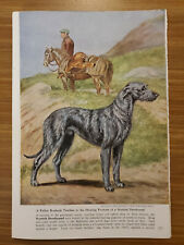 1958 Scottish Deerhound Dog Bookplate Art Print Painted by Edwin Megargee – ng82
