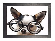 Chiwawa Weari White Beautiful Little Puppy Sweet Cute Animal Poster Glasses Dog