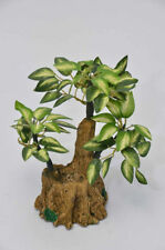 Bonsai Trees Flowers