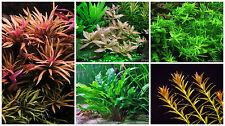 Plants Combo Pack 3 - Live Aquarium/Fish Tank Plant