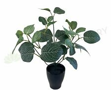 SP0328C Fittonia / Nerve Plant (CLEARANCE STOCK) 33cm
