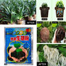 2-50 pcs Garden Take Rooting Hormone Powder Simple Root Fast Growth Plants Grow