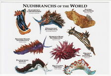 Art Postcard of 8 Nudibranch Opalescent Spanish Shawl Hopkins Rose Sea Clown