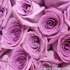 Fresh Cut Lavender Roses,Flower Delivery,Bouquet-Event-Pa rty-Diy-Bulk (24 Roses)