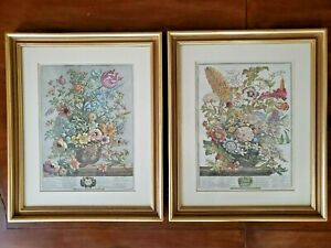 Pair 1730 Robert Furber Vintage Flower Display, Art Prints Beautifully Framed