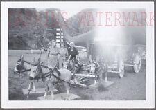 Vintage Photo 3 Women w/ Mule Drawn Cart & Dinosaur Statue 759433