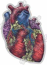 "Human Heart Anatomy Cardiology Doctor Nurse Car Bumper Vinyl Sticker Decal 4""X5"""