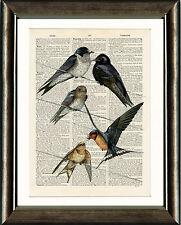 PAGINA LIBRO D'ANTIQUARIATO Art Print-Birds sul filo stampa vintage DIZIONARIO Wall Art