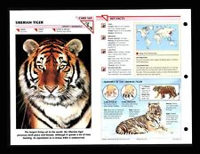 Siberian Tiger Wildlife Fact File Mammal Animal Card Home School Study 1.69