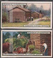 Delivering Tobacco To Curing Barn Sheds Two  90+ Y/O Trade Ad Card