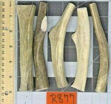 5 Real Whole (Unsplit) Mule Deer Antler Bone Dog Chew Toy & Dental Treat Small