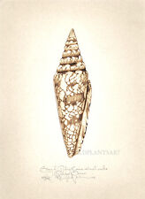 Sea shell GLORY OF INDIA original handworked SEPIA limited edition LARGE print