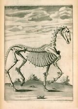 The Skeleton by Andrew Snape, 1683, The Anatomy of a Horse Poster