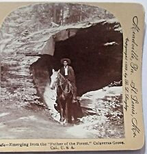Stereoview Photo FATHER FOREST TREE MAN HORSE CALAVERAS GROVE CALIFORNIA vintage