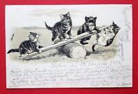 Prägedruck AK KATZE 1902 Katzen auf Wippe   ( 23379