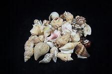 1 Bag Of Mixed Saint Pete Beach Florida Sea Shells Seashells 2 Pounds