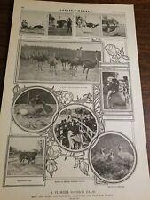 A Florida Ostrich Farm-1901 Leslie's Weekly[D83]