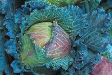 Vegetal Col ENERO REY 12000 semillas