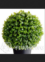 100 PCS Seeds Swallow Palm Bonsai Rare Jade Plants Succulent Flowers NEW 2019 B