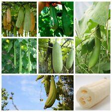 10Pcs Loofah Vegetable Seeds Luffa Sponge Mix Home Garden Plants Chinese Okra